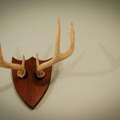 Diy Deer Antler Necklace Rack