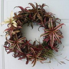 Bromelaid Living Wreath