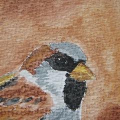 Watercoloring Birds