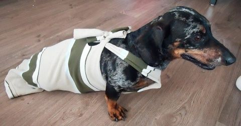 Our paralyzed wiener dog's recycled drag bag .  Free tutorial with pictures on how to make a dog outfit in under 30 minutes by sewing with shirt. How To posted by Recycled Miracles.  in the Other section Difficulty: Simple. Cost: No cost. Steps: 11
