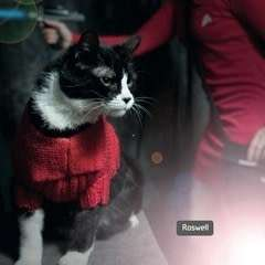 Star Trek Cat Costume