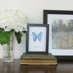 Faux Butterfly Taxidermy