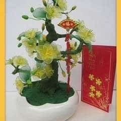 Apricot Flowers For Tet Holiday
