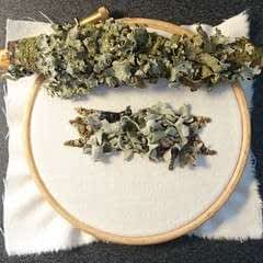 How To Make A Lichen Covered Branch
