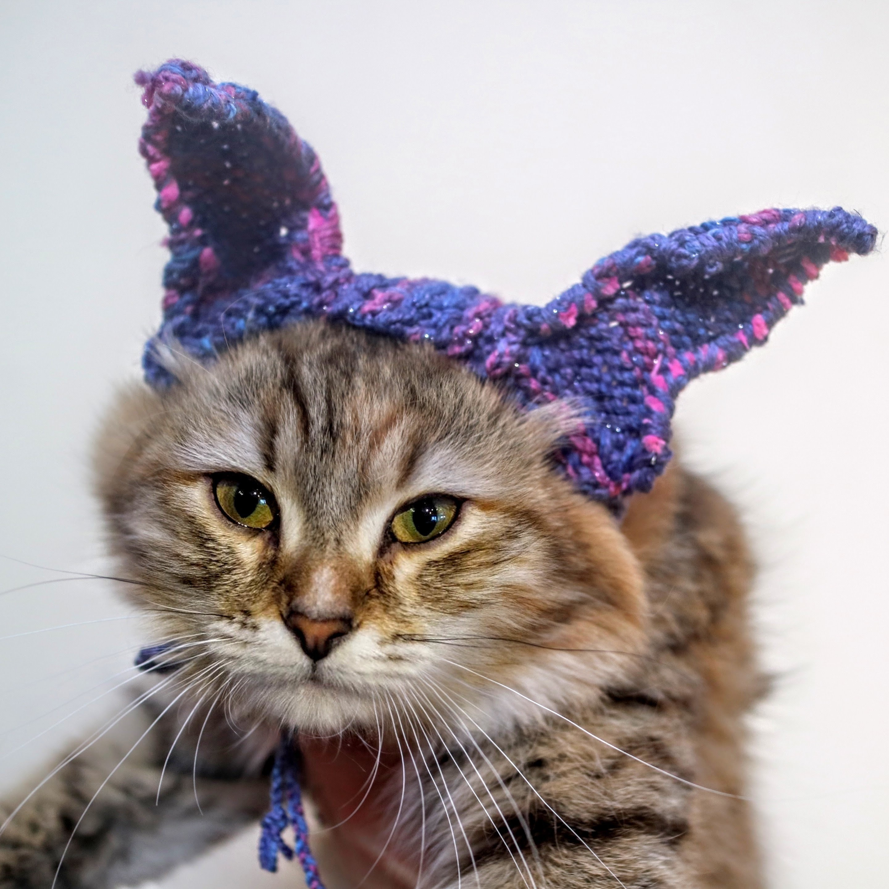 bunny ear cat hat 183 how to make a pet hat 183 yarncraft on