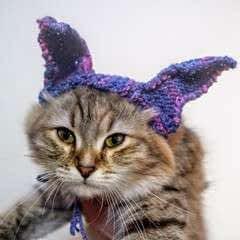 Bunny Ear Cat Hat