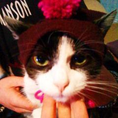 No Sew Cat Hat