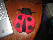 Ladybug