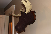 Handmade Mounted Moosehead