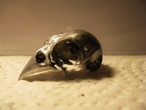 Bellatrix Lestrange Bird Skull Necklace Part I
