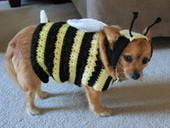 Cricket Turns Into A Bumblebee!