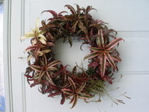 Bromelaid Living Wreath