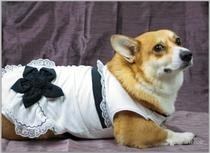 Party Dress For A Corgi