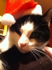 Santa Cat Hat!
