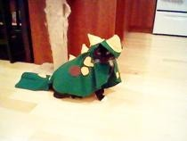 Cat Costume   Dinosaur!