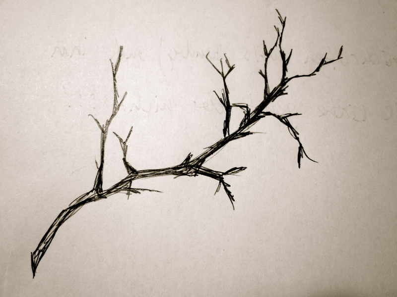 Drawings Of Tree Branches To Coloring Page