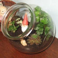 Gnome Terrarium