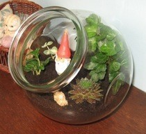 Gnome Terrarium