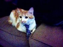 Neck Tie Cat Collar
