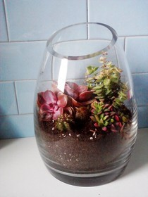 Succulent Terrarium