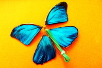 Wind Up Paper Butterfly
