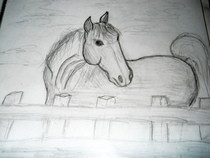 My Horse Drawings :D