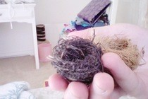 Tiny Bird Nests