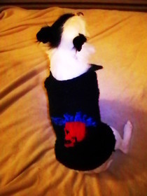Mohawk Skull Doggie Sweater