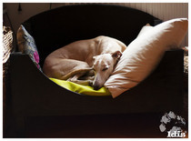 The Whippet Bed!