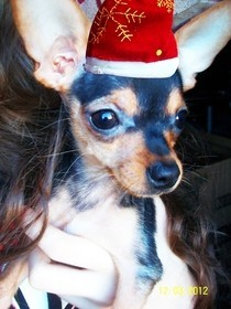 Tiny Christmas Hat