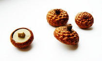 Acorn Buttons