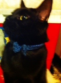 Crochet Kitty Bowtie Collar