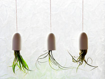 Cheap Hanging Air Plant Containers