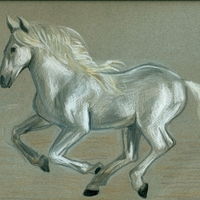 Large_square_andalusian_horse_2
