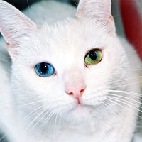 Large_square_800px-cat_eyes_1284783064