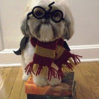 Large_square_harry-potter-dog