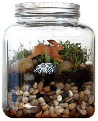 Medium terrarium