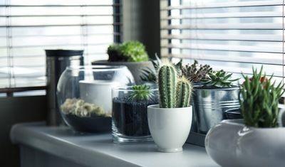 Medium pots 716579 1280