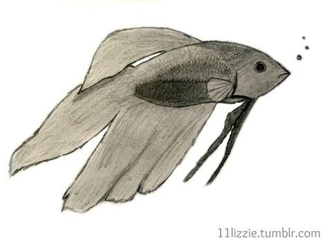 A drawing of my pet betta, named Fish. :) .  Draw & Paint a piece of animal art in under 90 minutes by drawing with paper, pencil, and idea. Inspired by creatures and fish. Creation posted by 11lizzie :). Difficulty: Easy. Cost: No cost.