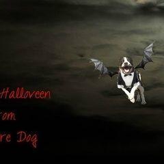 Vampire Dog Photoshop