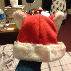 Santa Claws/ Cat Hat