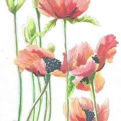 Poppy Ink Drawing