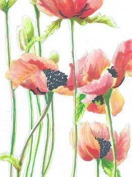How-to draw and paint poppies with Chameleon Colour Changing Pens .  Free tutorial with pictures on how to create a drawing or painting in under 120 minutes by creating and drawing with pens, paper, and  photograph. How To posted by Chris .  in the Art section Difficulty: 3/5. Cost: Cheap. Steps: 16