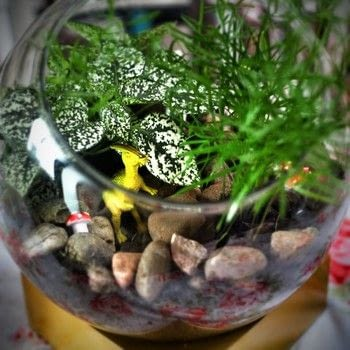Create your own prehistoric terrarium with toy dinosaurs .  Free tutorial with pictures on how to make a terrarium in under 10 minutes by gardening with vase, potting soil, and plants. Inspired by dinosaurs. How To posted by Cat Morley.  in the Home + DIY section Difficulty: Simple. Cost: Cheap. Steps: 5