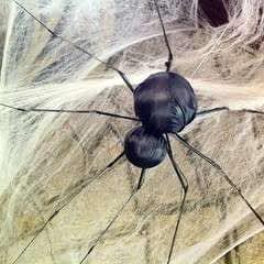 Spiderbrella!