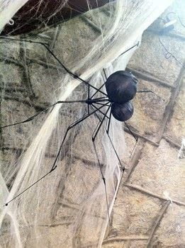 Make a Giant Spider! .  Free tutorial with pictures on how to make a Halloween decoration in under 60 minutes by spraypainting, constructing, and decorating with umbrella, styrofoam ball, and styrofoam ball. How To posted by BarryBelcher.  in the Decorating section Difficulty: Easy. Cost: Absolutley free. Steps: 7