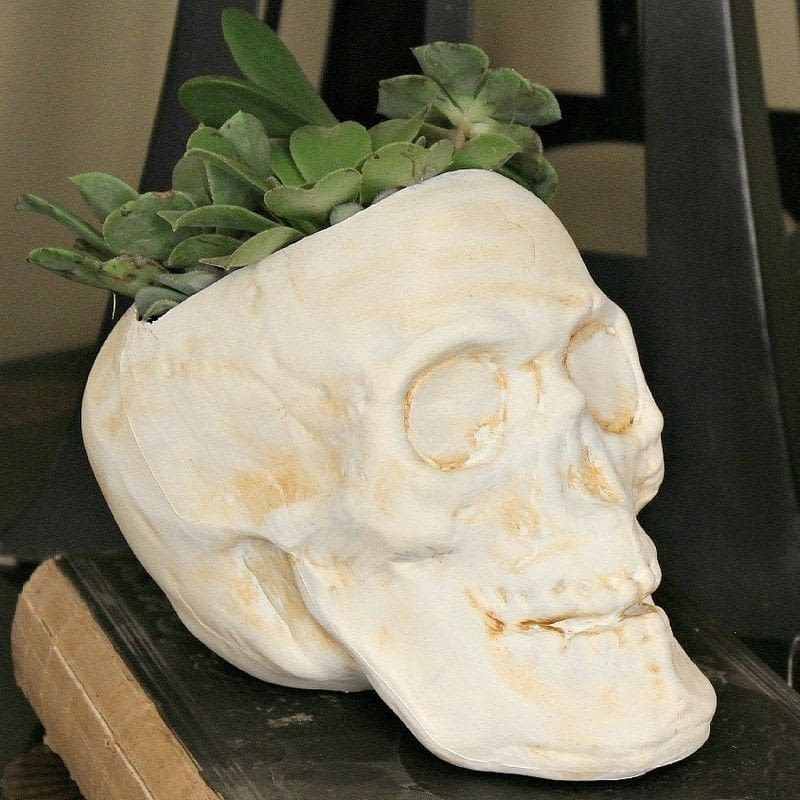 Succulent Skull 183 How To Make A Vase Pot Or Planter 183 Decorating On Cut Out Keep