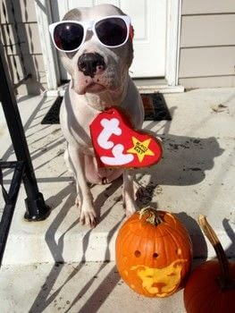 Beanie Babie Dog Costume :) .  Make a costume in under 60 minutes using construction paper, construction paper, and sharpie marker. Inspired by costumes & cosplay. Creation posted by Stephanie.  in the Other section Difficulty: Easy. Cost: Absolutley free.