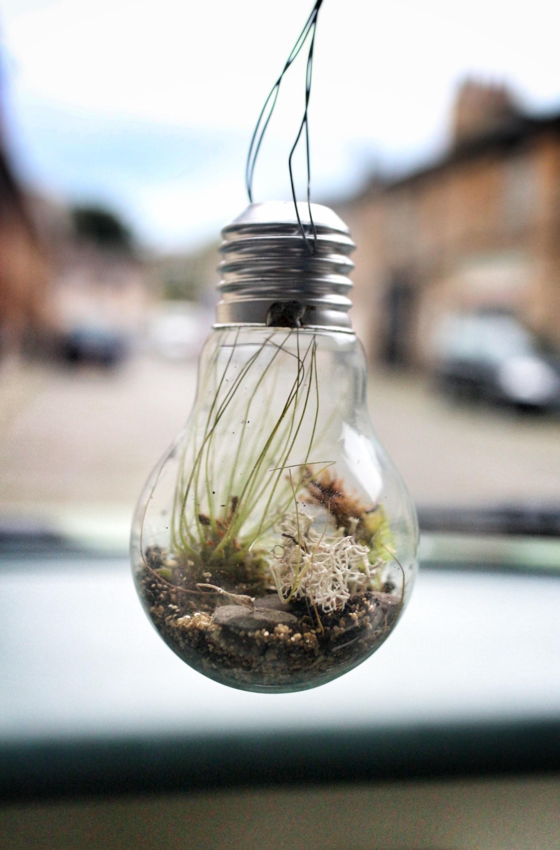 Lightbulb Terrarium How To Make A Terrarium Home Diy On Cut Out Keep