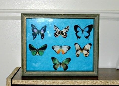 Scientific Curiosities For the Home .  Free tutorial with pictures on how to make a shadow box in under 80 minutes using scissors, decoupage glue, and glue gun. How To posted by Shayla F.  in the Home + DIY section Difficulty: Easy. Cost: Absolutley free. Steps: 6
